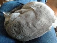 今日の貴方の時計は何ですか?  (ΦωΦ) 猫が熟睡しているので時計を取りにいけていません。