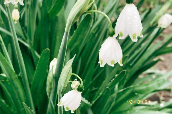 これって何の花ですか? 可愛いです