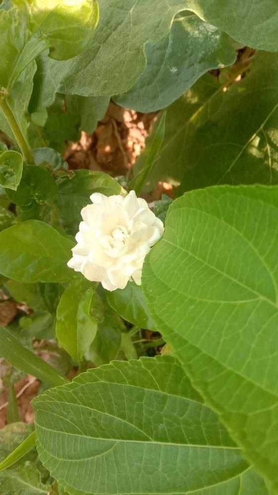 この花の名前を知りませんか?