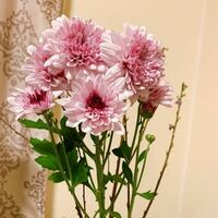 スーパーで一目惚れしお花を購入しましたが 何という種類のお花でしょうか?  よろしくお願いいたします。