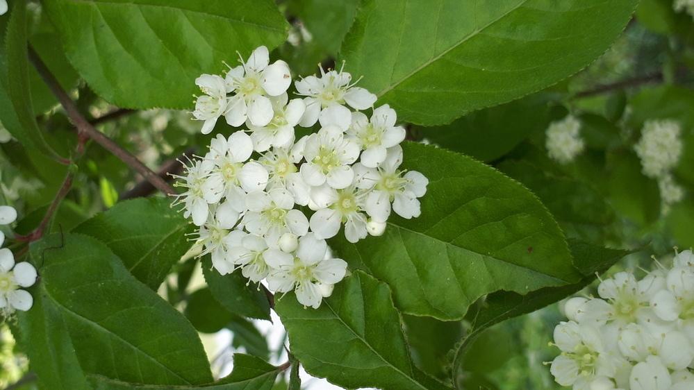 散歩中に見つけました。 この花は何という花でしょうか? ご存じの方、お教えください。