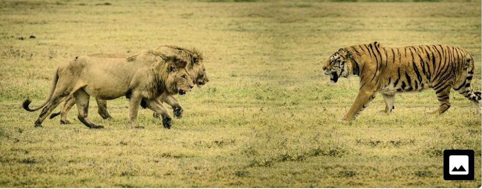 力だけの強さってのはトラの様な毒など搦め手を用いずに己の肉体一つで獲物を仕留めに行くスタイル、搦め手有りってのはコモドドラゴンの様な毒を用いて獲物を仕留めるスタイルを言うのですかね?