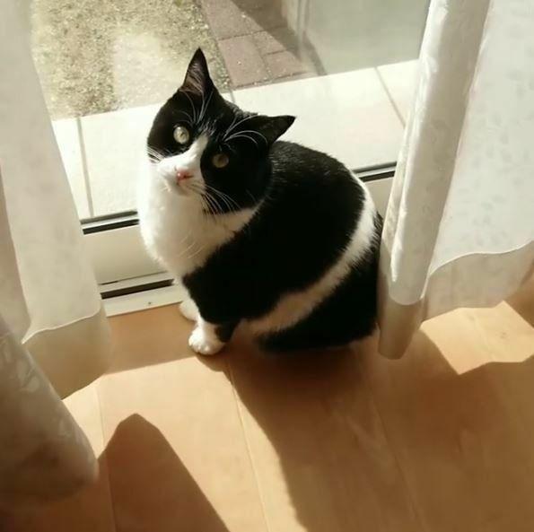 ひなたぼっこするはちわれ猫ちゃんの ふわふわした身体からお日さまの匂いのするはちわれ猫ちゃんを抱いて、お昼寝してみたいですか?