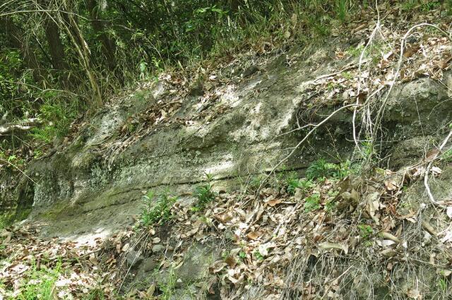 杁ヶ洞池の淵に成形されてるえぐられたような形状地層は昔池の水による浸食によるものですか? 岐阜県美濃加茂市杁ヶ洞池で、