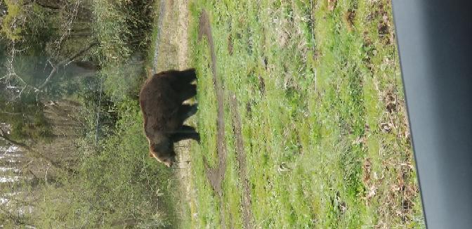 動物園でまったく草のない円をずっと熊が回っていました。 動物園では動物たちの移動行動(同じ動作の繰り返し)などがみられますが、これは何ヵ月も歩き続けて草が生えなくなった結果でしょうか??