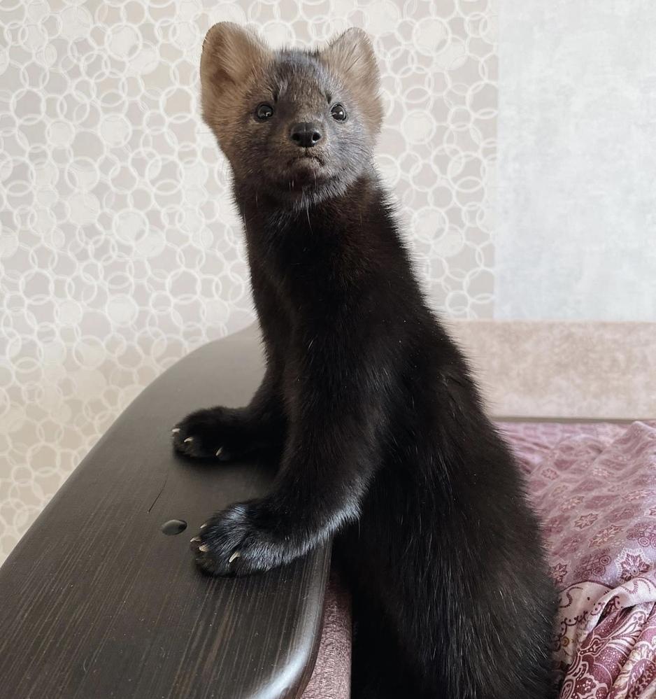 この生き物は何者ですか?