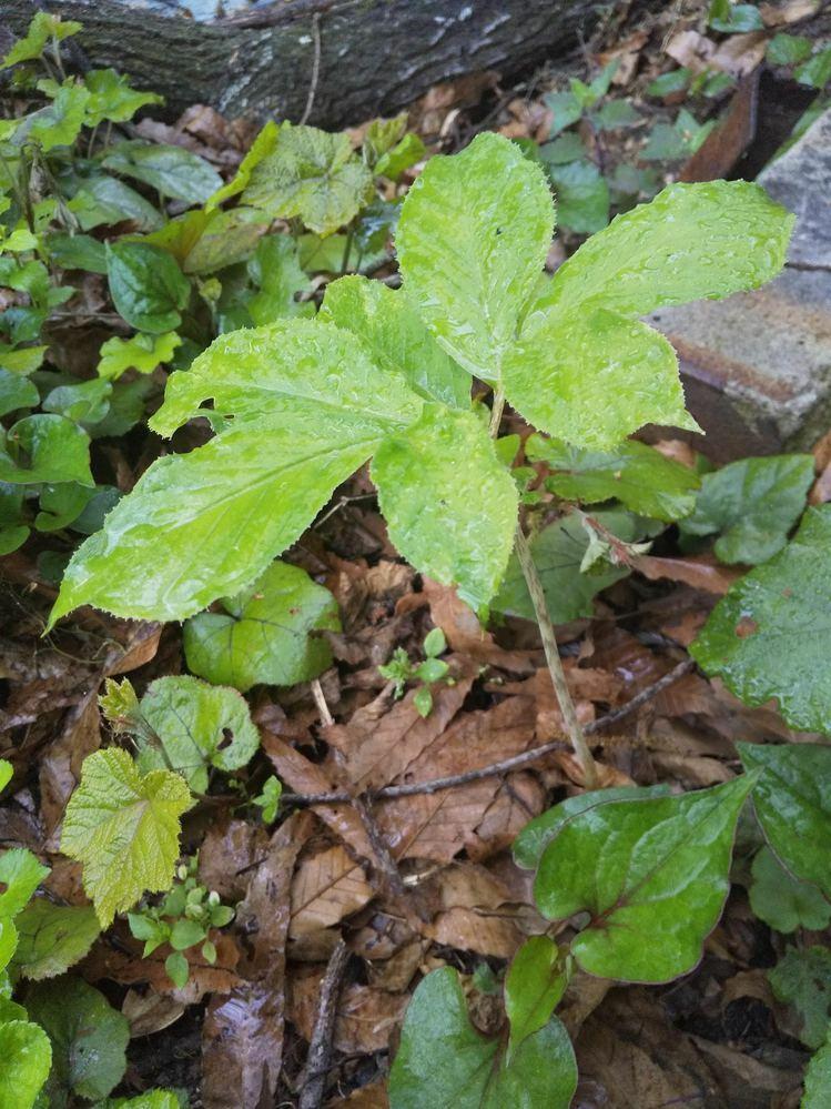 この植物の名前を分かる方、教えて下さい。