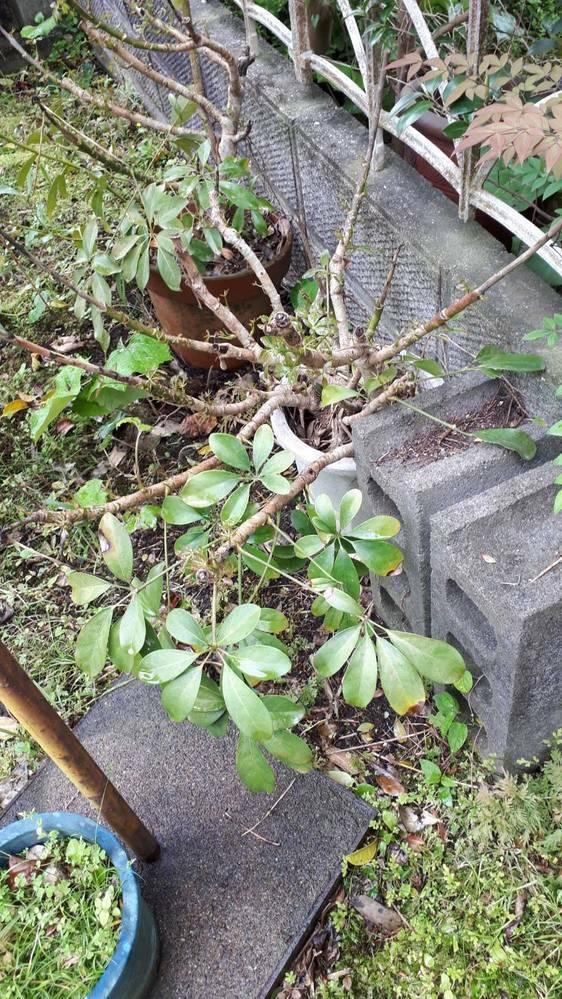 この植物の名前がわかりません。 わかる方、教えて下さい。