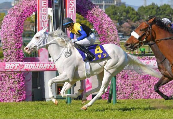 競走馬 サラブレッド これから、白毛色馬は少しずつ増えてくると思いますか?