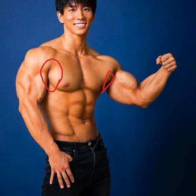 大胸筋の横の方を付けたいのですがいい方法ありますか? 画像の赤〇のところら辺の筋肉を付けたいです。 プッシュアップ、チェストプレスで乳の土台はある感じなのですが横の盛り上がりが足りない気がします。 オススメのメニューあれば教えてください。