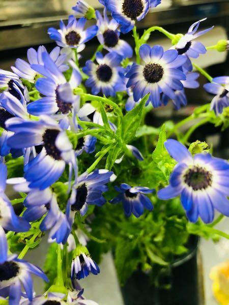 花に詳しい方! 頂き物なんですけど、花言葉が知りたいのでこの花の名前を教えてください、、 一つの花が五百円玉弱くらいの大きさです