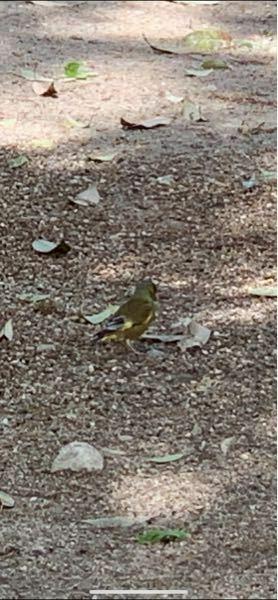 この鳥の名前教えてください。 画像荒くすみません。