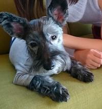 この犬は、何という犬種名ですか?