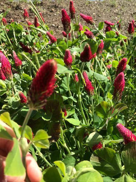 この赤い花(?)の植物の名前を知りたいのですが、教えて頂けないでしょうか?