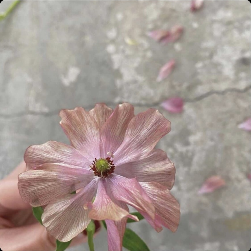 花の名前 この花の名前わかる方いましたら教えてください!!