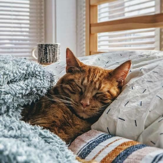 とてもくだらない事なのですが、同じ方いましたら教えて下さい。 猫が同じ枕で寝ていて、向き合って顔を付き合わせるように寝ていることもあります。 そんな時に運悪く猫がクシャミをする日もあって、そうすると顔にツバキが直撃してしまうわけですが、その場合どうしていますか?わたしは眠くてその時は顔をタオルで拭くだけです。衛生的にすぐ顔を洗ったほうがいいのかな…皆様はどうしていますか?