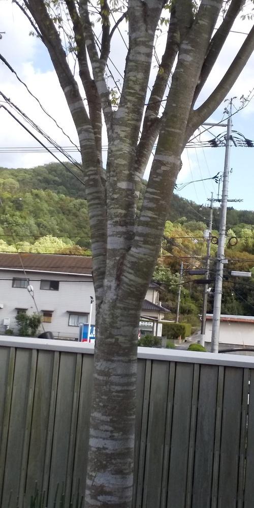 この木はなんですか?