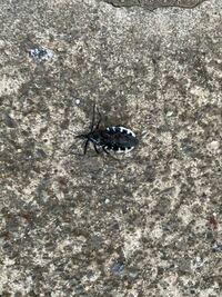 今日見かけたんですがこの虫なんて虫ですか?