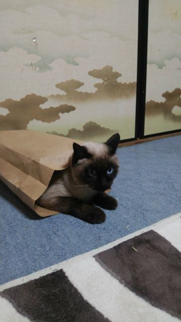 このような猫は好きですか