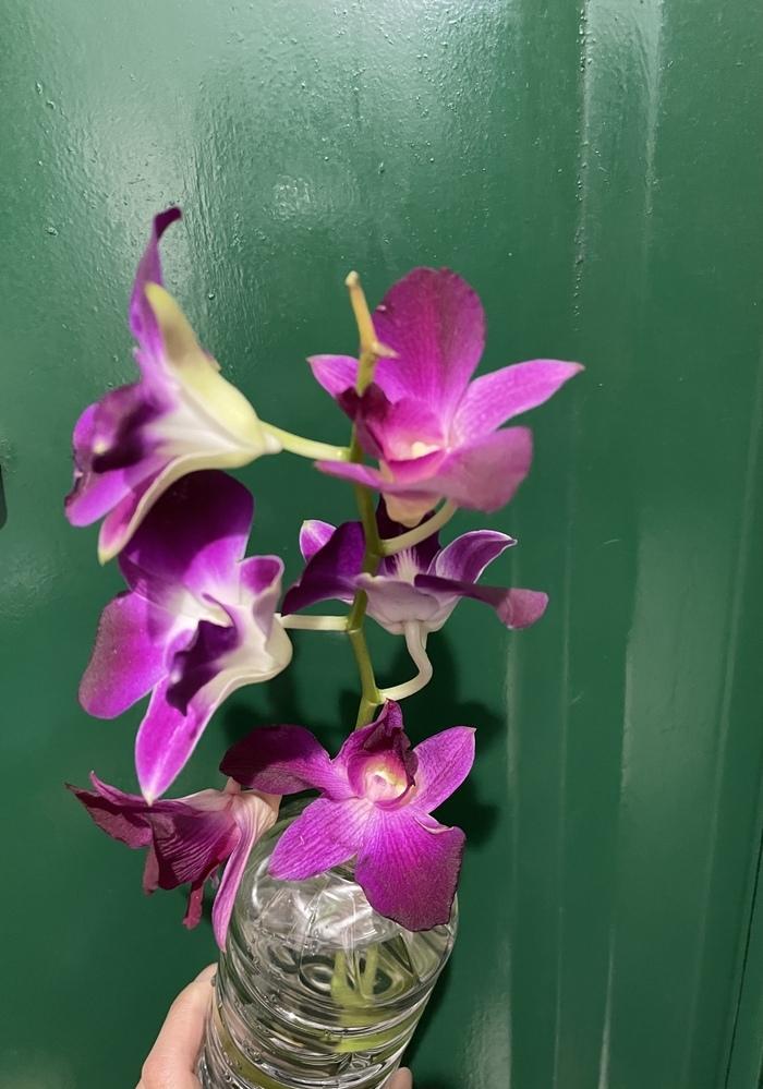 先日お花を貰ったのですが、種類が分かりません。このお花の名前は何でしょうか? 花言葉もありましたら教えて頂けると嬉しいです(^^)