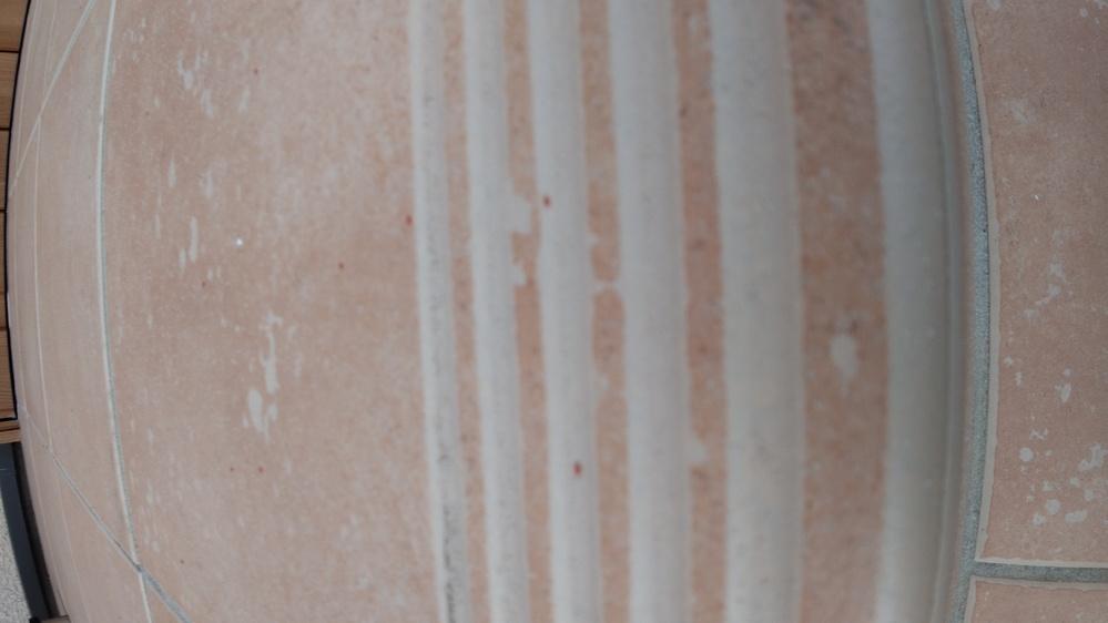 この虫は何でしょうか?赤い油虫?玄関前のコンクリートや金属のポストなどあらゆる所にいます。