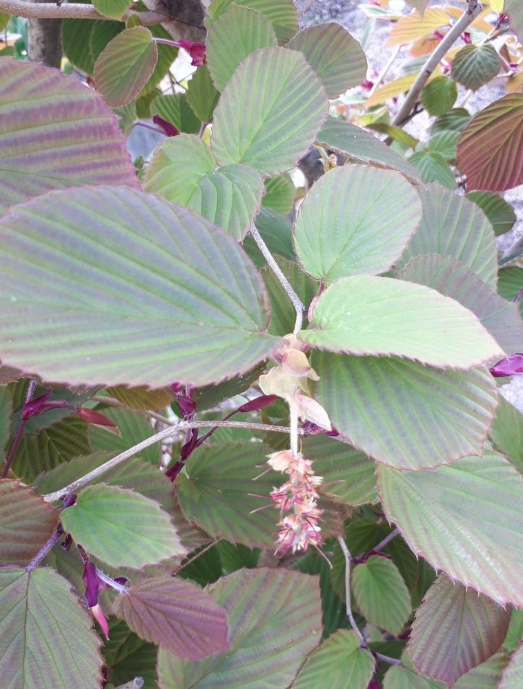 散歩中に見つけました。 これは何という植物でしょうか? お分かりの方方、お教えください。 見たことがあるのですが、忘れてしまいました。