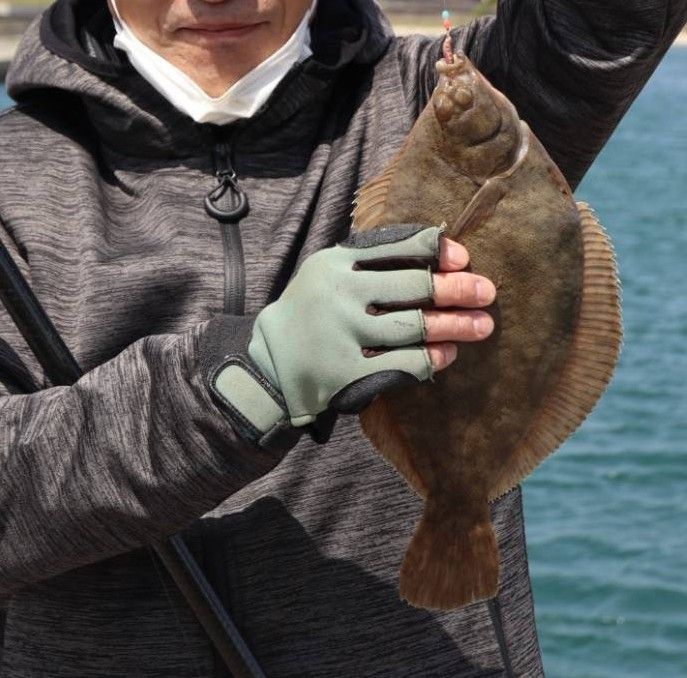 この魚は何ですか?友人が釣果として送ってきました。左目なのでヒラメということらしいのですが、ヒラメにしては口が小さい気がします。