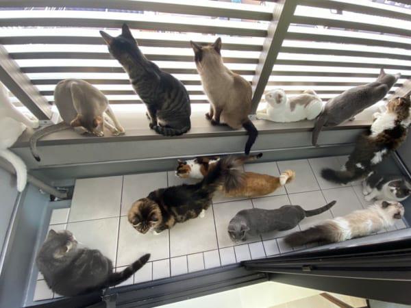 どの猫が好みですか