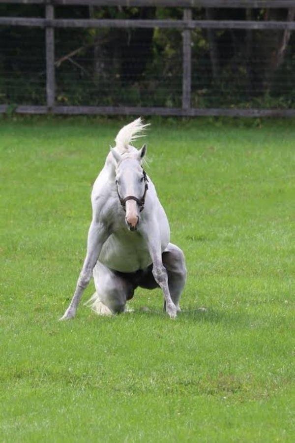 彼はなんて馬なんです?