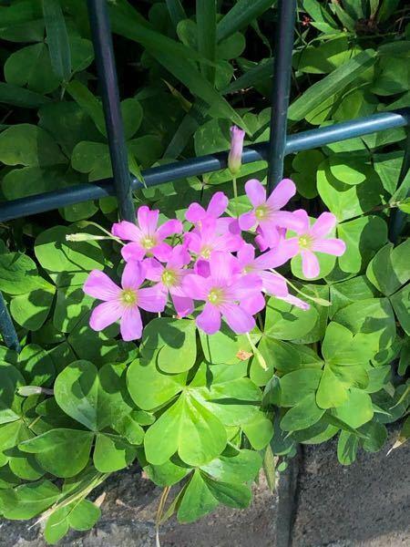 これは何というお花ですか?