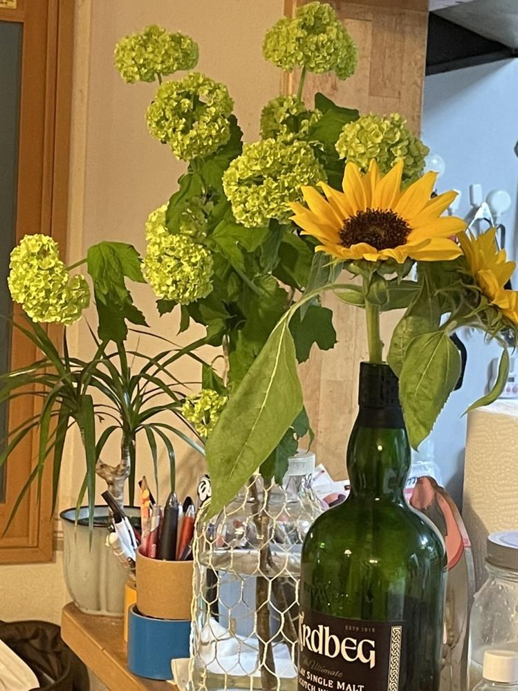 こちらの緑のお花の名前教えて下さい。