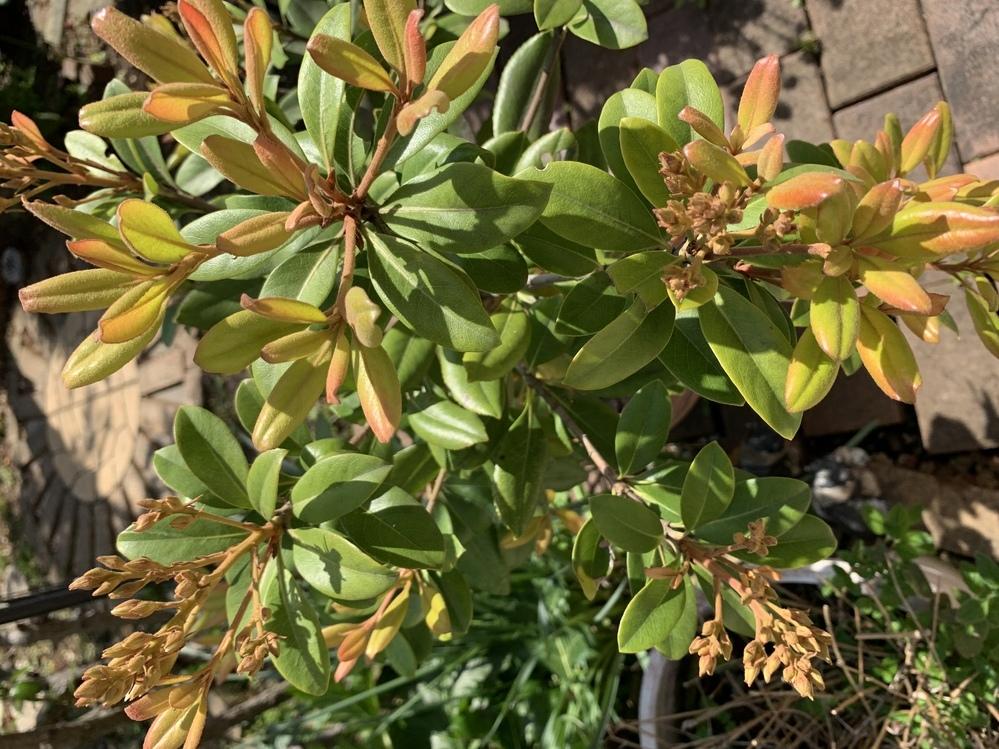 これは何という植物かご存知の方いましたら、教えてください。 宜しくお願いします。