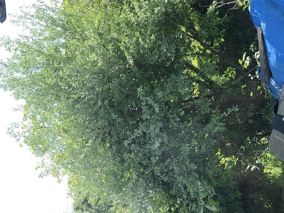 グミ(たぶん、びっくりグミ)の木のことなのですが、10年前に植えて大きくなっているのにいつも10個位しか実がならないので、 実を沢山ならせたいのですが、どうしたら実が毎年なるようになりますか?簡単な方法などありますでしょうか?どなたかご存知のかたがいらっしゃいましたらよろしくお願いいたします。