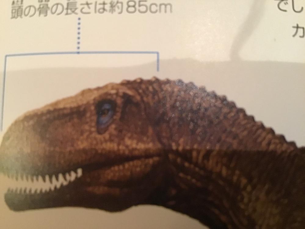 恐竜の図鑑やフィギュアの中の恐竜の一部が背中に小さなトゲ(ステゴサウルス、アマルガサウルス抜き)が描かれていることがあるのですが、 本当にあるのですか? 描く理由はなんですか? 骨格に本当にトゲ...