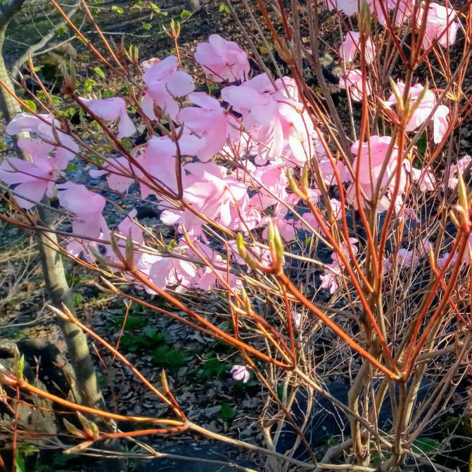 この花の名前はなんですか? 拡大してるので画質悪くてすみません