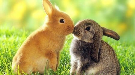 『ウサギ』は、好きですか?