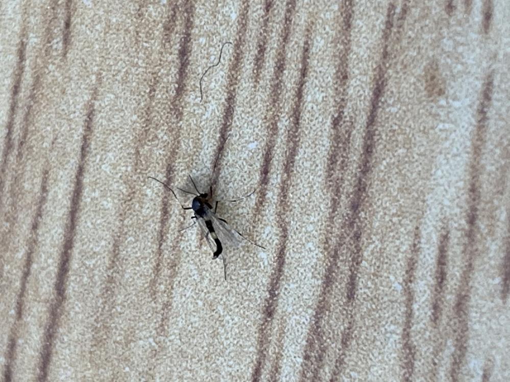 この虫はなんですか?教えてください。