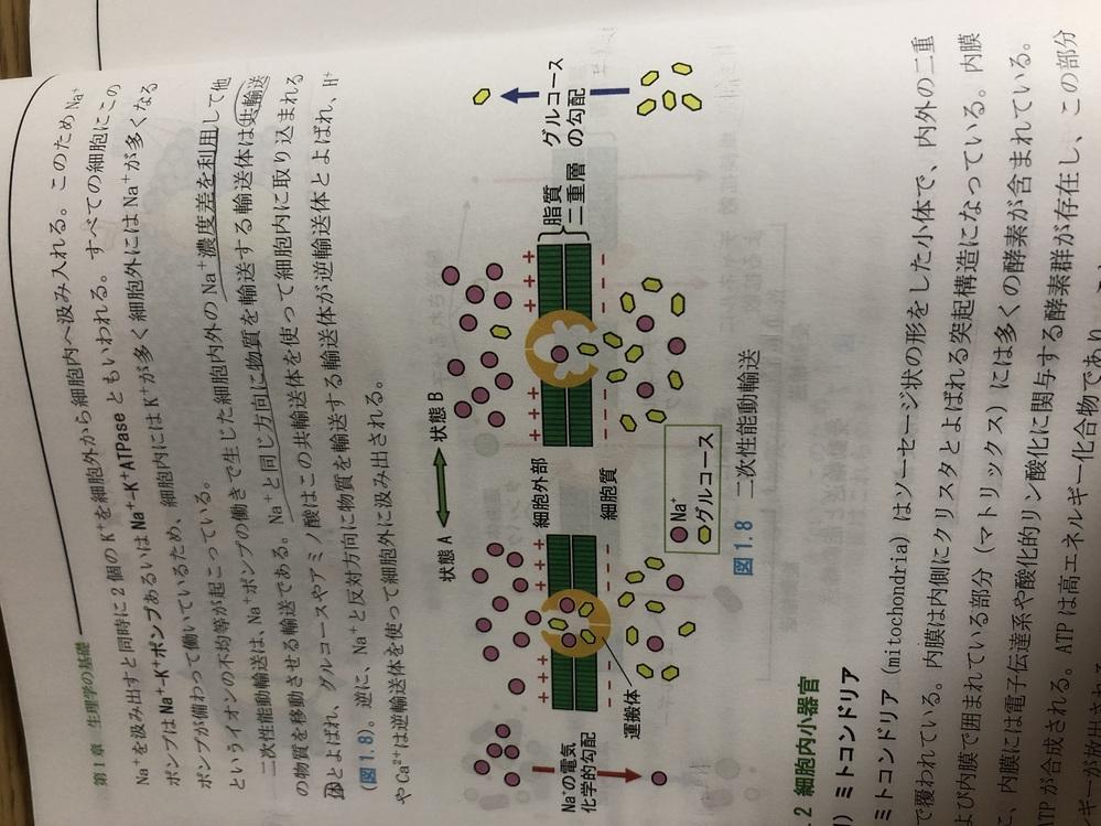 生理学についてです。 初めて質問するのでわかりづらかったらすみません。 能動輸送でNaのイオンが細胞内から外に汲み出す時、グルコースはNaイオンと同じ方向に輸送され、細胞内に取り込まれると書いて...
