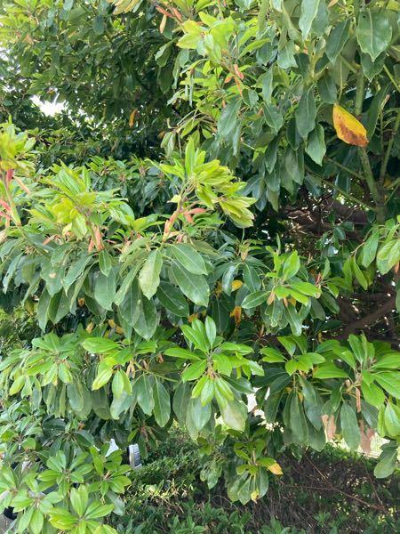 この樹木の名前を教えてください!