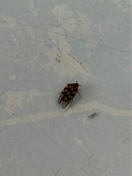 これはなんの虫ですか??