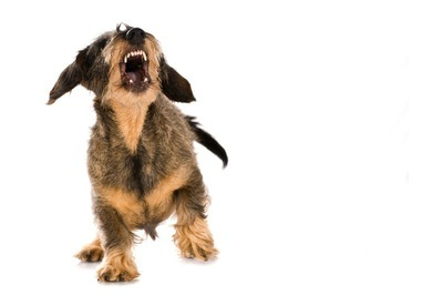隣の犬の痴呆犬の吠え!吠え!!について質問です。 う ちは一軒家ですが隣との隙間が50センチ位しかないので隣のミニチュアダックスが1分で40回ペースで、1日8時間くらい吠えてます。 暖かくなり...