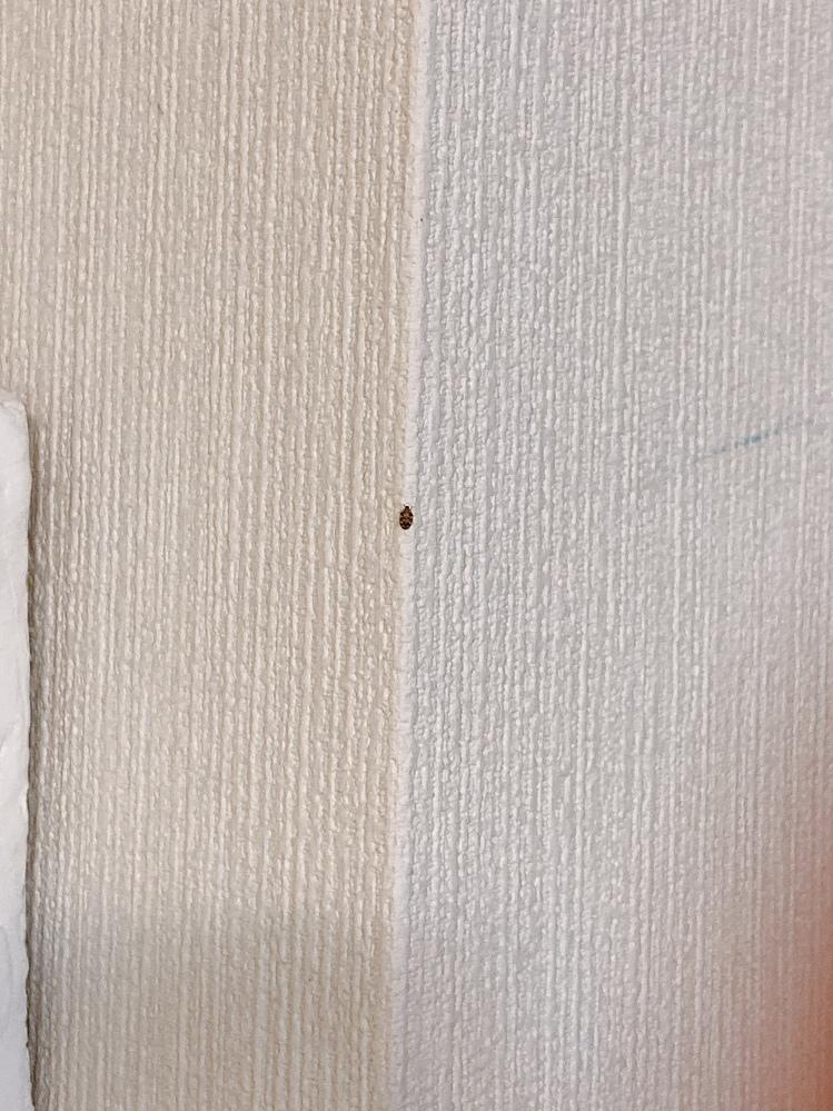 ヒメマルカツオブシムシの成虫であっていますでしょうか?また、今日発見したのですが、もう卵を産んでいる可能性はありますか?