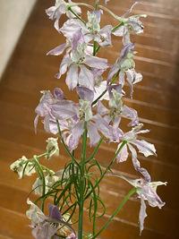 少し枯れてきてしまっているのですがこの花の名前がわかる方教えてください。