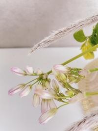 こちらのつぼみの花はなんというお花ですか?