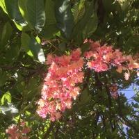 花の名前と花言葉教えてくださいませ 街路樹で5〜6mの高さの木です