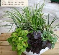 この植物の名前を教えてください 手前は「ヒューケラ」と書いてありました 後ろのほうの草っぽい植物とクリーム色の縁取り葉っぱの植物の名前ご存知でしたら教えてください!