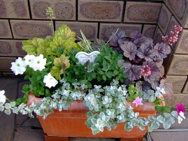 この手前の植物と中央の植物の名前を教えてください 何度も質問してすみません ヒューケラは分かるのですが手前のシルバーの葉っぱのものと、中央のグリーンの葉っぱの植物を教えてください!
