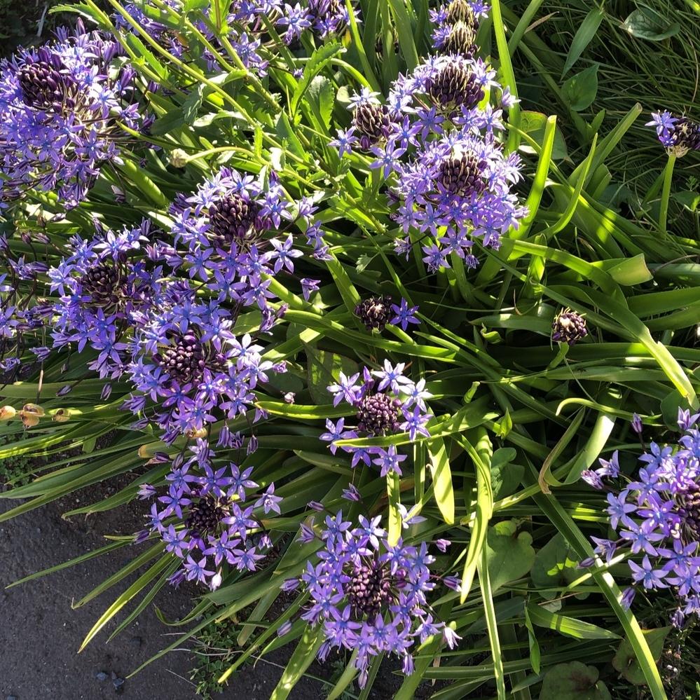 この花の名前教えてください、よろしくお願いいたします
