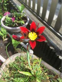 この赤い花はなんて花でしょうか。 画像検索でも特定できませんでした。 よろしくお願いします。