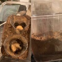 人工蛹室についての質問です。 初めてペットボトルで人工蛹室を作ったのですが、これで大丈夫でしょうか??